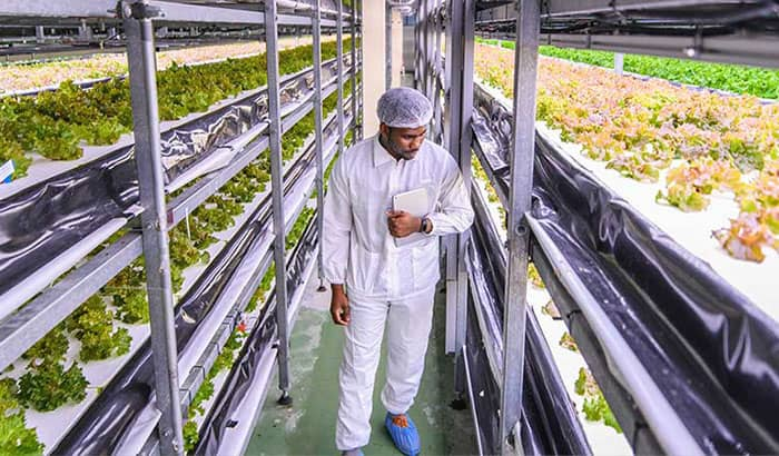 Why vertical farming is on the up