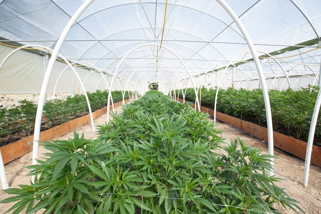 Commercial Cannabis Grow Operation; Shutterstock ID 666360106; Departmental Cost Code : 162800; Project Code: GBLMKT; PO Number: GBLMKT; Other: